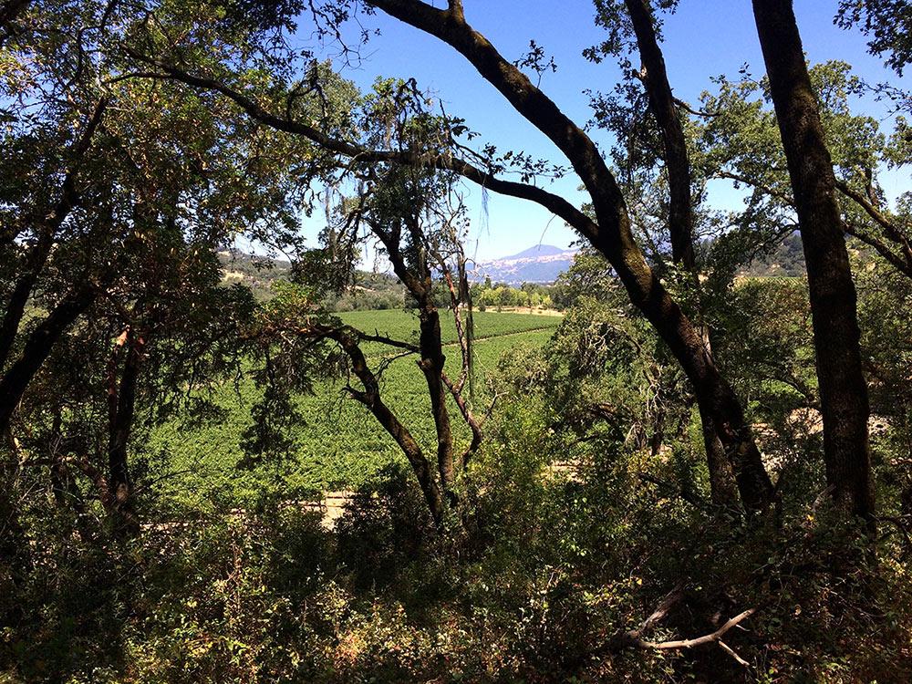Sutro Wine California Alexander Valley