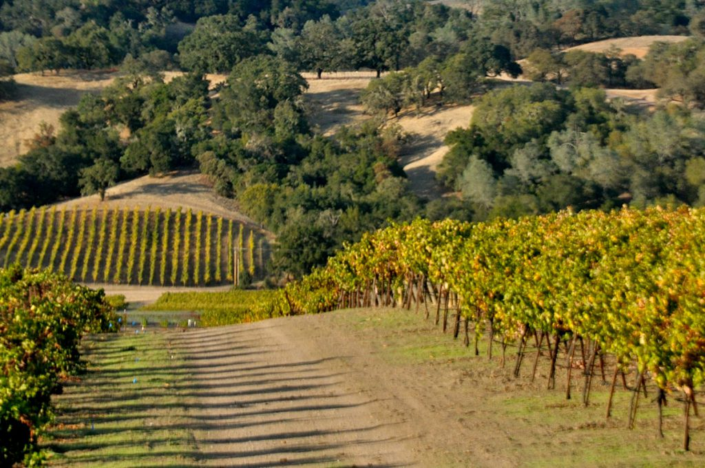 Zialena Wine Hidden Gems Alexander Valley